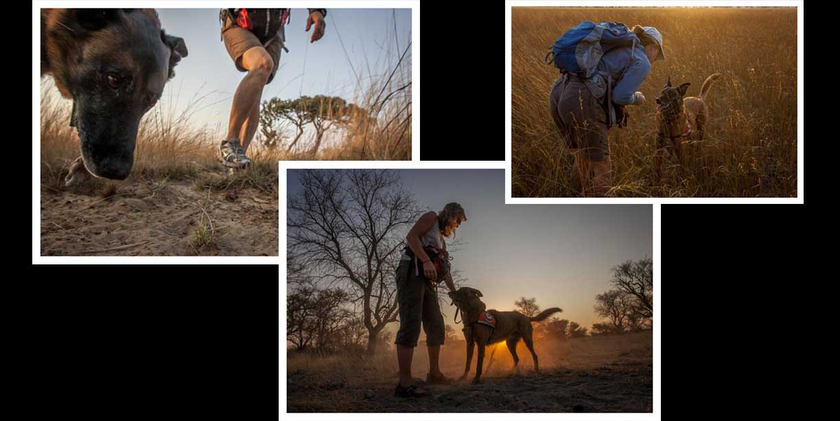 working dogs for conservation blog