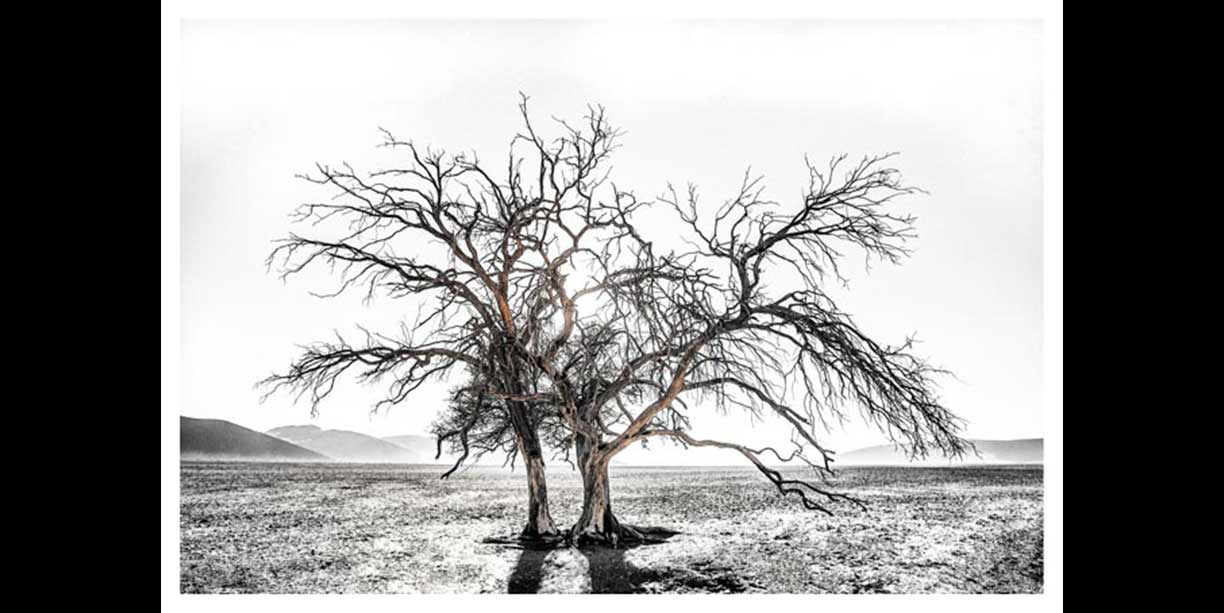 photographic image_of_single_tree_in_namib_desert