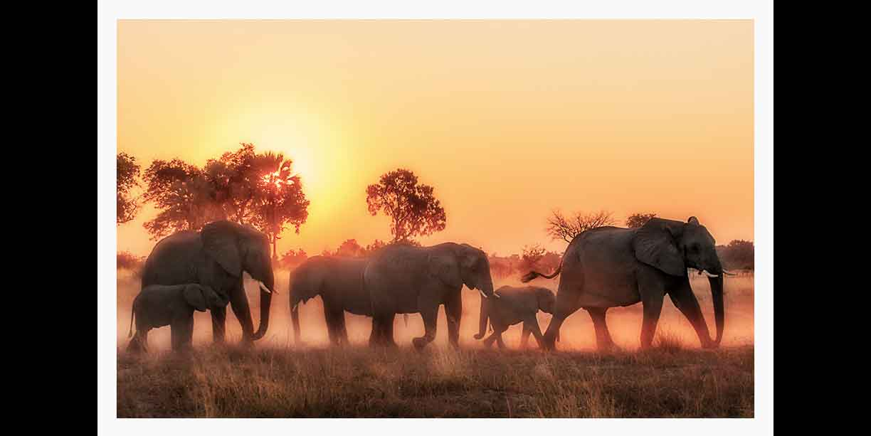 herd_of_elephant_kicking_up_dust_as_they_move_at_sunset